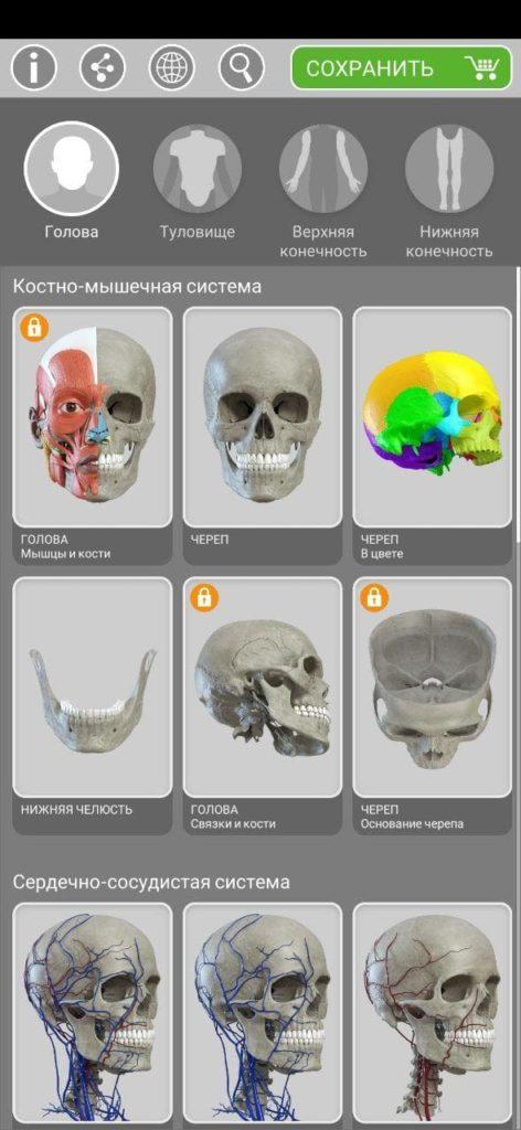 Анатомия 3D Атлас Части тела