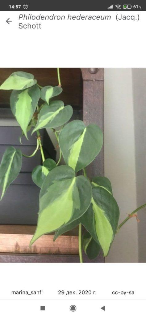 PlantNet Растение