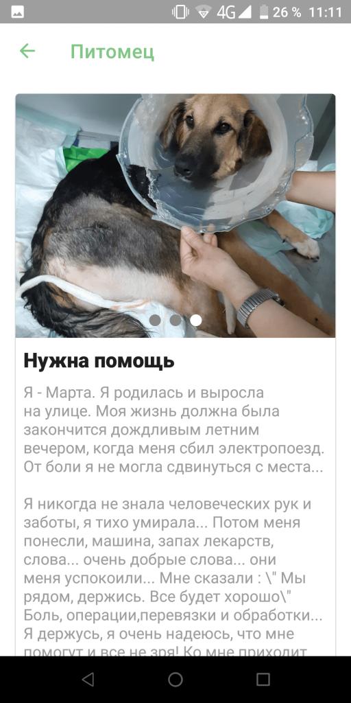 iBolit помощь животным Карточка