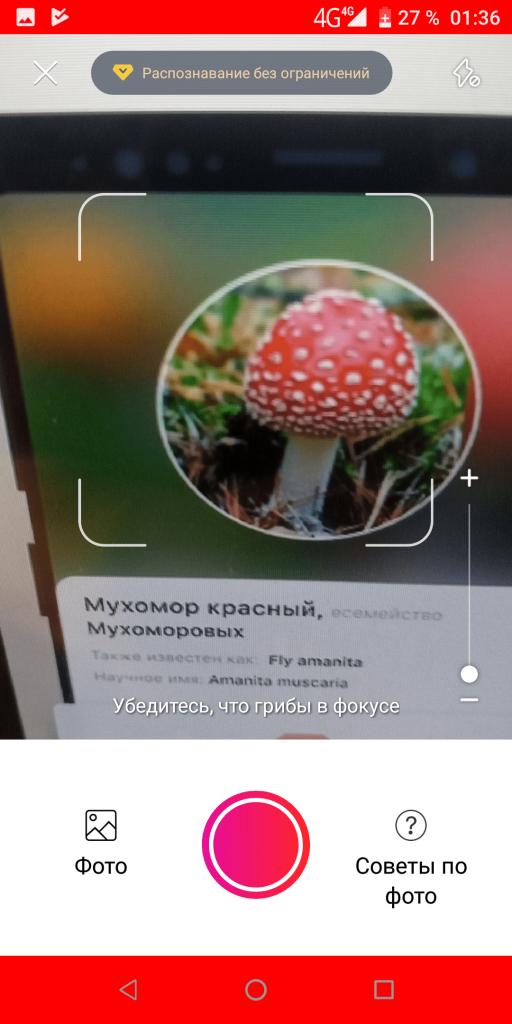 Picture Mushroom Распознавание
